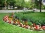 Legszebb kertészeti eredmények