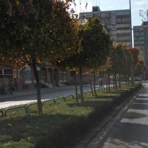 gombjuhar-sor-es-tamariska-a-topanka-elvalaszto-savban_80636